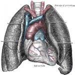Organs and Tissues for Transplant